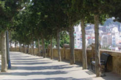 Camí de la Pietat que porta fins al cementiri.