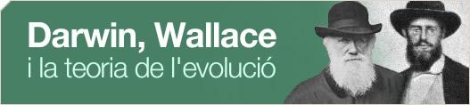 Darwin, Wallace i la teoria de l'evolució