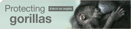 Protecting gorillas