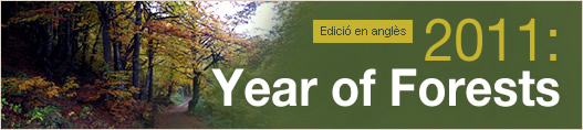 2011: Year of Forests